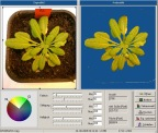 Screenshot LeafScan